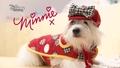 Provocarea modei cu Minnie - O ținutăpentru căței