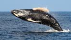 Great Oceanic Migrators