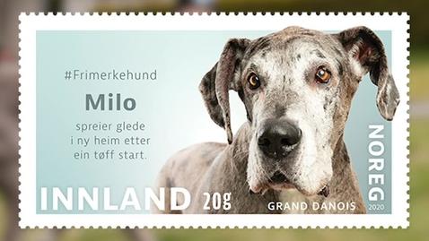 Thumbnail for entry #Frimerkehund: Milo