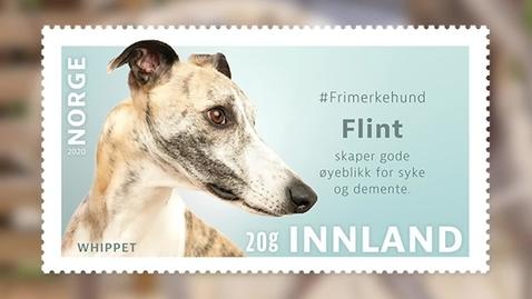 Thumbnail for entry #Frimerkehund: Flint