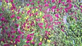 Thumbnail for entry Forårets fugle og farver