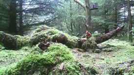Thumbnail for entry Projekt egern