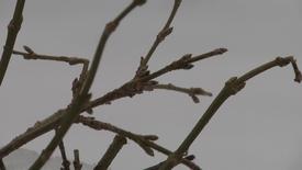 Thumbnail for entry Sibirisk kulde og forår ?