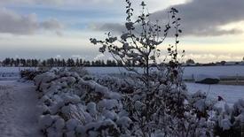 Thumbnail for entry Den første sne i Thy - Landbolyst Mark