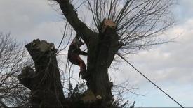 Thumbnail for entry Det gamle piletræ i Bremdal
