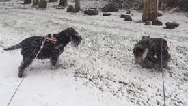 Thumbnail for entry Luftetur i snevejr i Sunds