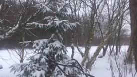 Thumbnail for entry Sne i Sunds