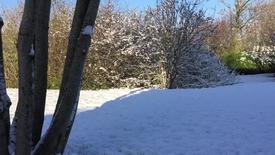 Thumbnail for entry Den første sne i Thy - Snedsted
