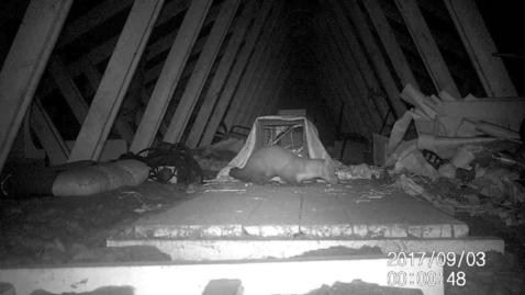 Mår på loftet