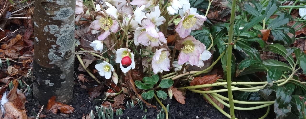 Spirende Forår i Sakskøbing