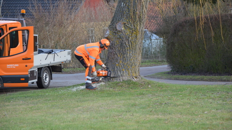 Så var det slut med  vores gamle træ.