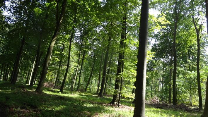 Skæv Skov.