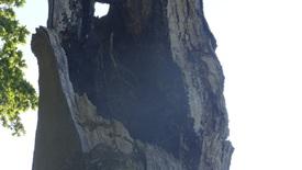 Thumbnail for entry Toppen af Mormors Bøg