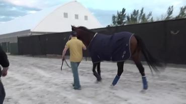 Toast of New York Arrives at Gulfstream Park In Preparation For His Next Start, the Pegasus World Cup Invitational