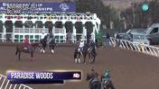 Paradise Woods Schooled in the Gate at Del Mar on November 2nd, 2017
