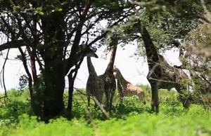 VNR Zambia - Biodiversity