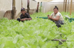 Agroecology: Organic Farming in Cambodia