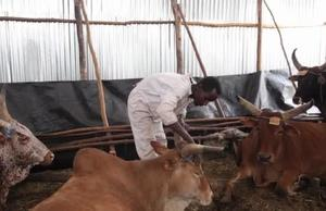 Ethiopia Youth Story - Animal Fattening Project