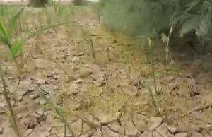 Desert Locust control operations in Yemen