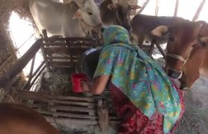 FAO News Video: Acting early to mitigate floods in Bangladesh