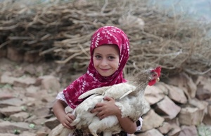 FAO: Emergency livelihoods support to reduce acute food insecurity in Yemen