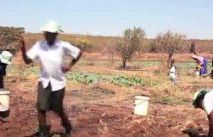 B-roll FAO Generic footage