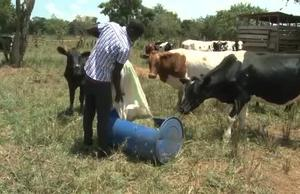 FAO Climate Action in Uganda