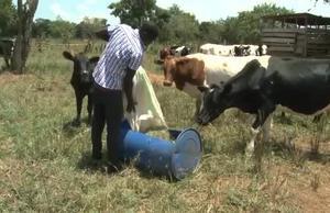 FAO Climate Action in Uganda