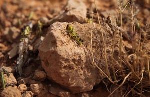 VNR Locust in Ethiopia and Somalia