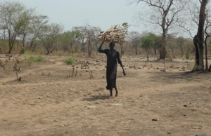 Sustainable Forestry: a Safety-Net for Gambella Refugees and Host Communities