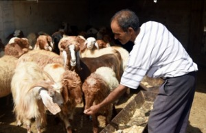 FAO in Syria: Regaining normalcy amidst conflict