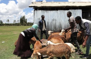 Ethiopia Youth Story - Sheep Rearing project