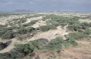 Desert Locust in Kenya - Control Operations in Turkana County VNR