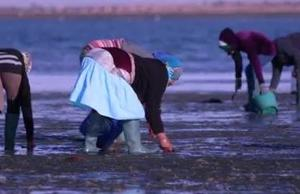 Tunisia Women Clam harvesters
