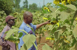 Kenya: Farming with Conservation Agriculture