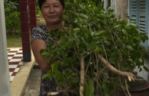 Gender and climate change adaptation in Viet Nam's agriculture sectors