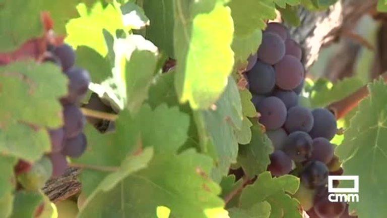 El Gobierno regional diseña un plan para aumentar la producción de uva en Mondéjar