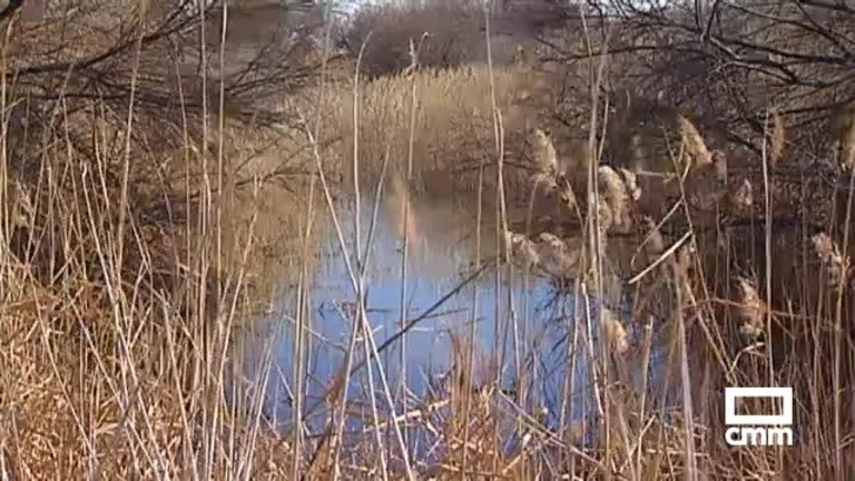 El río Cigüela vuelve a llevar agua a su paso por Herencia