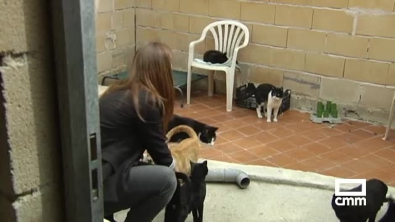 Protectora de animales de Guadalajara, saturada con más de 500 animales