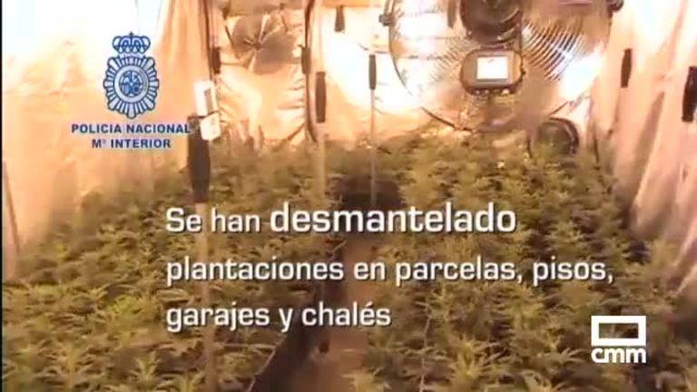 Requisadas unas 160.000 plantas de marihuana