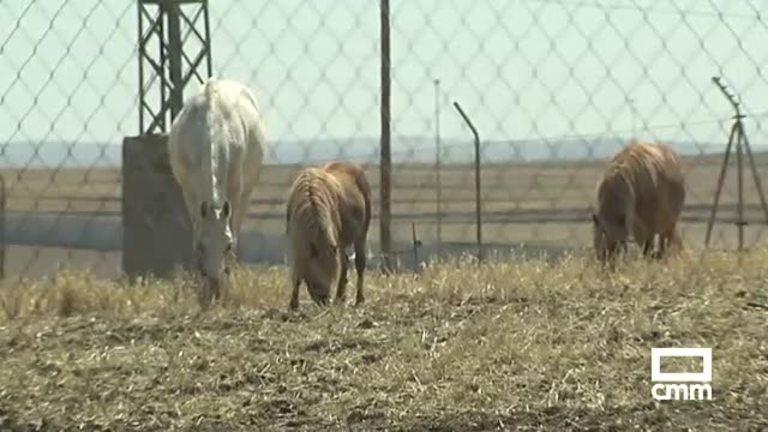 Varias mulas provocan un accidente en la autovía Madrid-Toledo