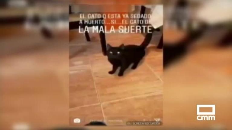 Detenida la mujer que mató en una lavadora a un gato en Villarrubia de los Ojos