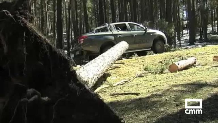 Pinares arrasados por el temporal: Orea pide la declaración de zona catastrófica