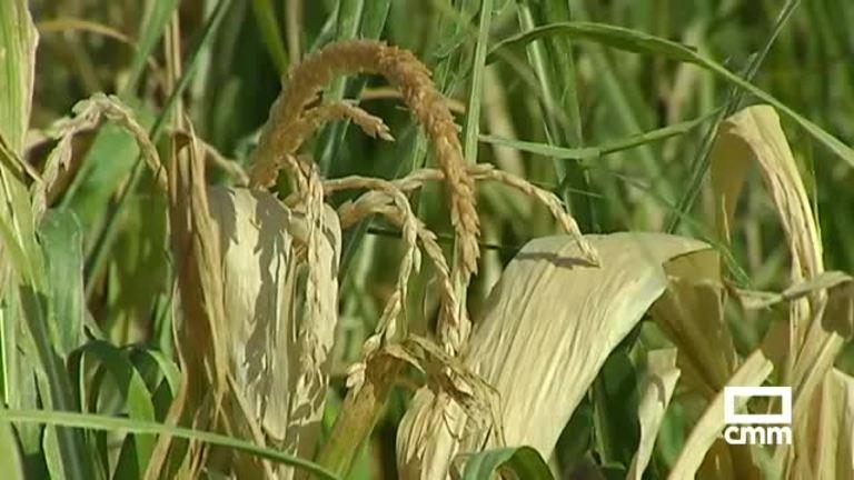 El campo de Castilla- La Mancha sufre los daños de las tormentas y el granizo