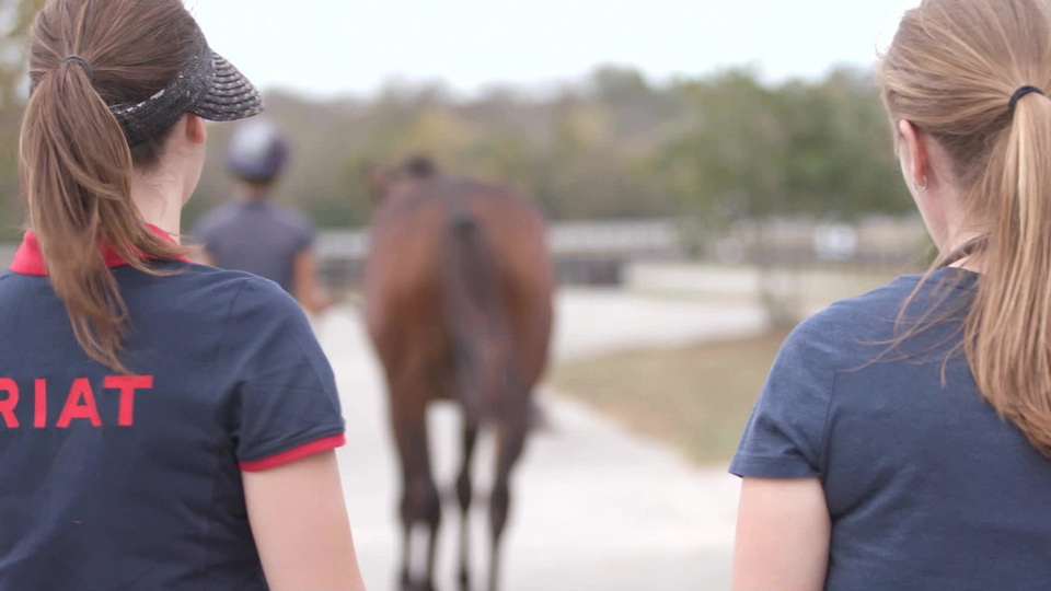 How To Lease Or Buy A Horse Us Equestrian