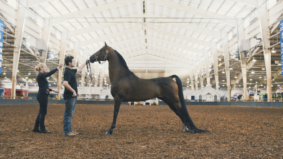 The Morgan Horse Us Equestrian,How To Cook Carrots Only