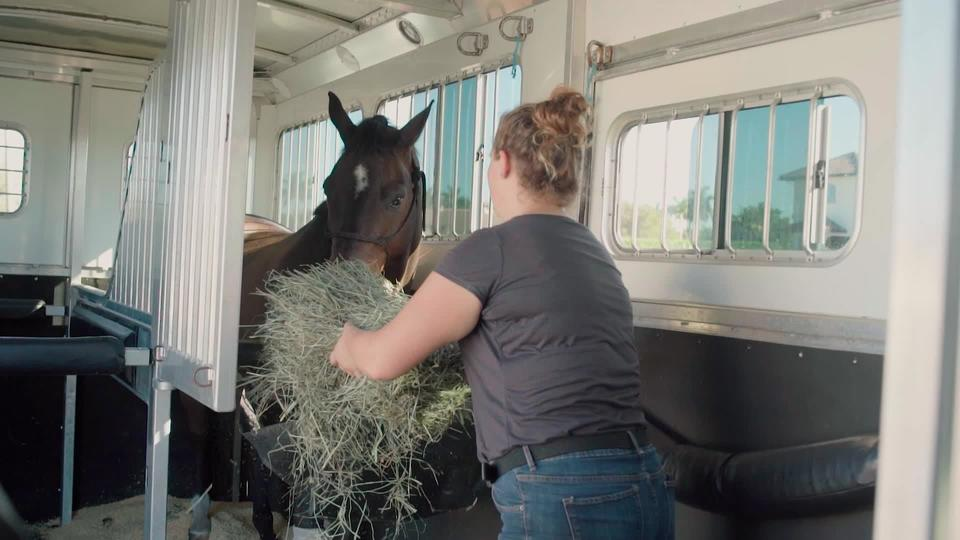 Feeding Competition Horses