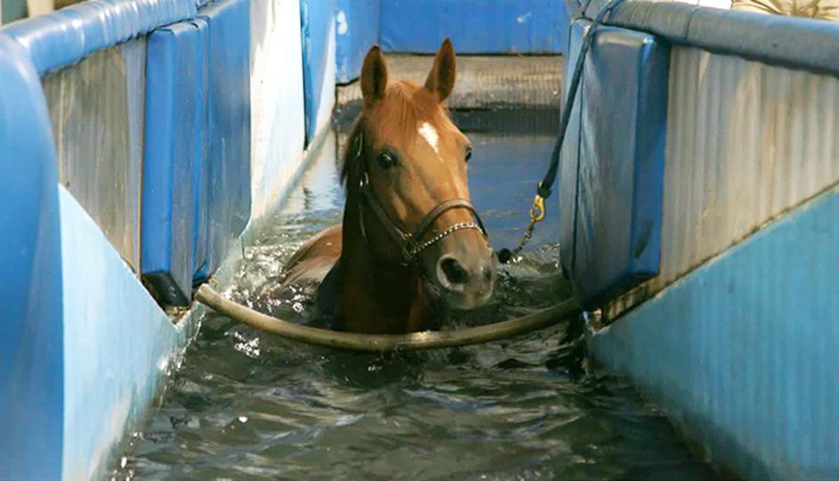 The help essay horsewoman