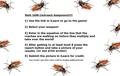 100B3-5Ochonosi Cockroach Challenge.mp4