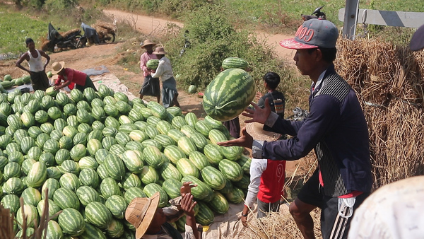 Myanmar Watermelon Growers Eager to Cash in on China Market